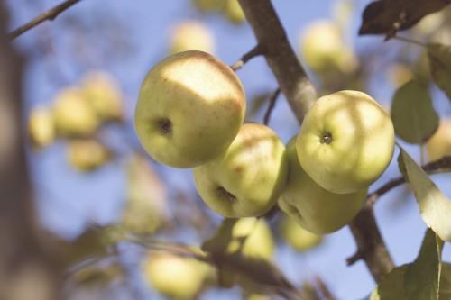 organic fruit photo